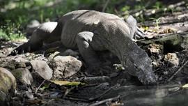 LIPI Respons Jurassic Park di Habitat Komodo: Harus Hati-hati