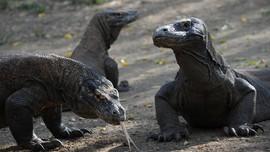 Meme Kocak dari Foto Viral Taman Komodo Jurassic Park