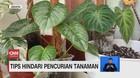 VIDEO: Tips Agar Tanaman Tidak Dicuri