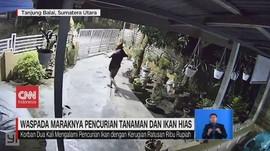 VIDEO: Waspada Maraknya Pencurian Tanaman dan Ikan Hias