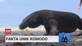 VIDEO: Fakta Unik Komodo