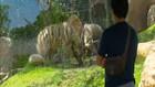 VIDEO: Tempat Wisata Bali Siap Sambut Pengunjung