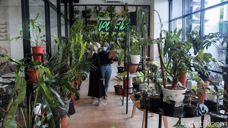 Pameran tanaman hias digelar di Plantee Coffee, Jl Ciputat Raya, Jakarta Selatan, Sabtu (31/10). Tanaman yang dipamerkan berharga ratusan ribu hingga puluhan juta rupiah.