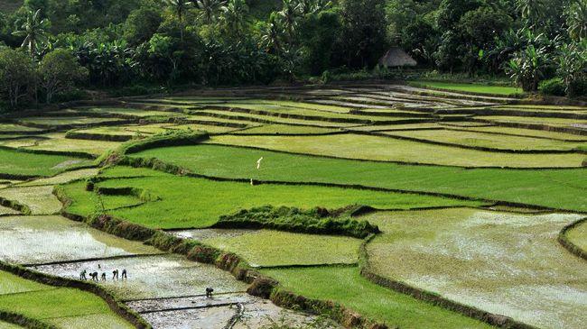 Yang mengatakan kalau yang istimewa di Nusa Tenggara Timur hanyalah Pulau Komodo saja mungkin belum pernah berkunjung ke sawah lingko.