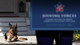 Anjing Biden Kembali Ke Gedung Putih usai Gigit Paspampres