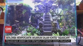 VIDEO: Lomba Mempercantik Akuarium dalam Kontes 'Aquascape'