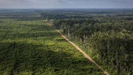 LSM: Penebangan Hutan di Papua Naik Saat Era Jokowi