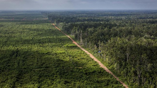 Greenpeace menyebut korporasi sawit kini bergeser ke Papua lantaran lahan di Kalimantan dan Sumatera mulai menipis, tapi hal tersebut disangkal oleh GAPKI.