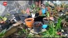 VIDEO: Dalam Seminggu, 150 Tanaman Aglonema Digondol Maling