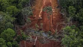 KLHK Ubah Area Izin Hutan, Greenpeace Ragu Tekan Deforestasi