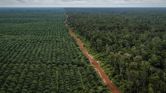 Ekonomi Papua, di Antara Balutan Otsus dan Seruan Merdeka OPM