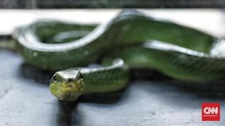 Ilmuwan AS Temukan Spesies Ular Baru dari Filipina