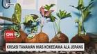 VIDEO: Kreasi Tanaman Hias Kokedama Ala Jepang