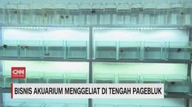 VIDEO: Bisnis Akuarium Menggeliat di Tengah Pagebluk