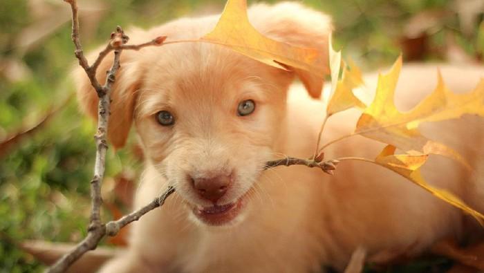 6 Jenis Anjing Berikut Lucu Untuk Dipelihara di Rumah!