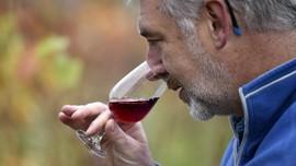 FOTO: English Noveau, 'Musuh Baru' Wine Prancis