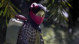 FOTO : Nestapa Buruh Wanita di Perkebunan Kelapa Sawit