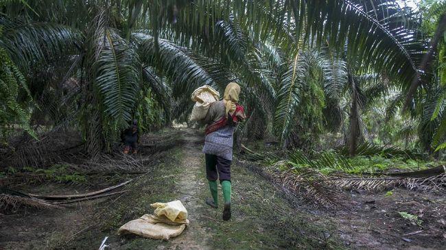 Yayasan Kehati menyatakan 1,8 juta hektare perkebunan sawit di kawasan hutan Indonesia tak mengantongi izin.