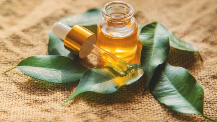 Intip 4 Manfaat Tea Tree Oil Bagi Kecantikan, Salah Satunya Bisa Usir Komedo Lho!