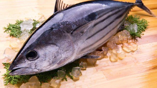 Tuna menjadi salah satu makanan tersehat di dunia. Berikut sejumlah manfaat makan ikan tuna.