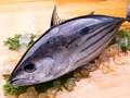 7 Manfaat Ikan Tuna: Cegah Kanker hingga Remajakan Kulit