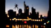 Kepakan burung camar, laba-laba di jembatan, serta lilin peringatan Revolusi Velvet termasuk dalam foto-foto pilihan CNNIndonesia.com pekan ini.
