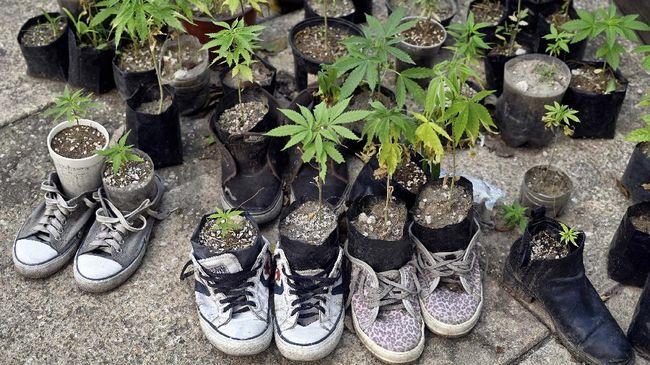 Komisi PBB merestui rekomendasi WHO untuk menghapus ganja dari kategori obat berbahaya dan mengizinkan penggunaan untuk keperluan medis.