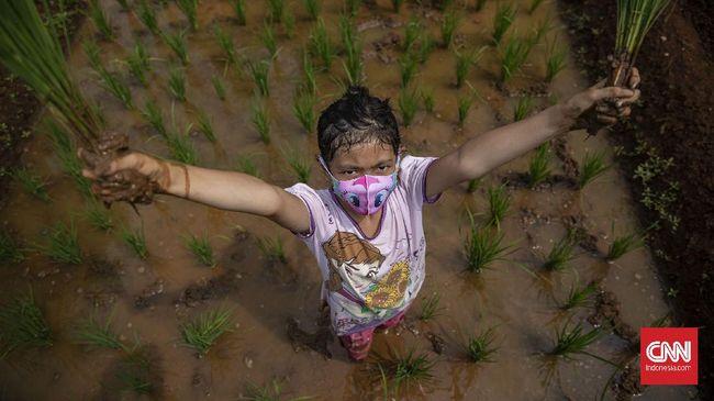 Gubernur Jawa Barat Ridwan Kamil menebar bibit padi ke 5 juta anak anggota pramuka demi mengantisipasi ancaman krisis pangan akibat covid-19.