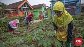 FOTO: Belajar Urban Farming di Timur Jakarta