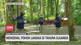 VIDEO: Mengenal Pohon Langka di Tahura Djuanda