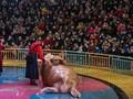 FOTO: Pelesir Akhir Pekan Warga Wuhan di Taman Akuarium