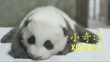 VIDEO: Anak Panda Kebun Binatang Washington Punya Nama Baru