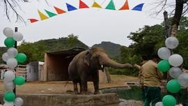 Pakistan Gelar Pesta Perpisahan untuk Gajah yang Kesepian