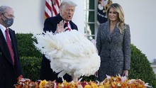 FOTO: Momen Trump Ampuni Kalkun di Tradisi Thanksgiving