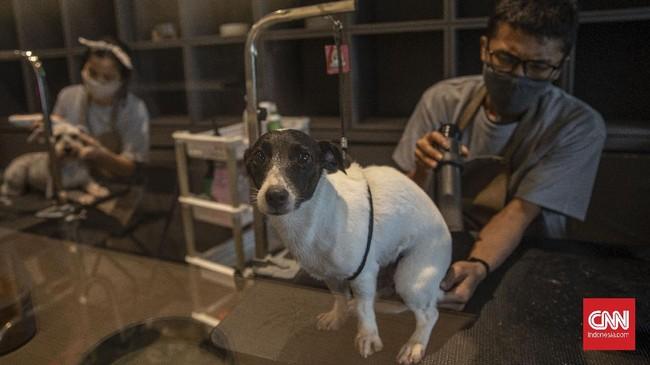 Tak seperti jenis usaha lainnya yang mengalami penurunan akibat pandemi, bisnis salon hewan tetap tak kehilangan daya tariknya.