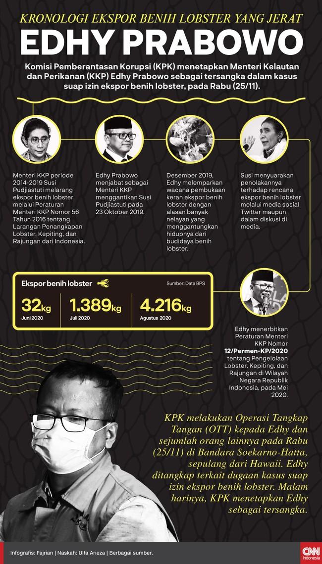 Kebijakan Edhy Prabowo membuka keran ekspor benih lobster yang dilarang oleh pejabat sebelumnya, Susi Pudjiastuti, menuai kontroversi. Berikut kronologinya: