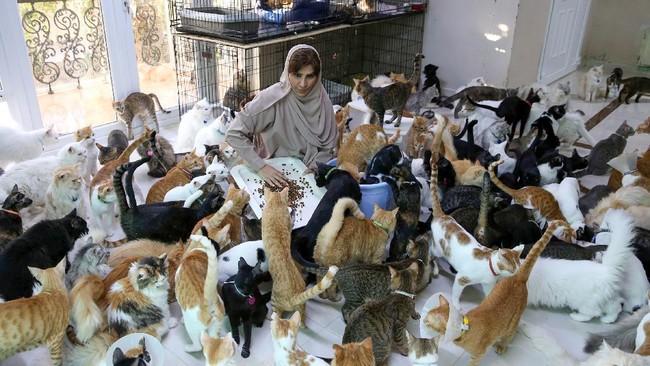 Maryam al-Balushi, wanita asal Oman yang telah hidup bersama hampir 500 kucing dan belasan anjing di rumah selama satu dekade terakhir.