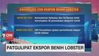 VIDEO: Kronologi Ekspor Benih Lobster