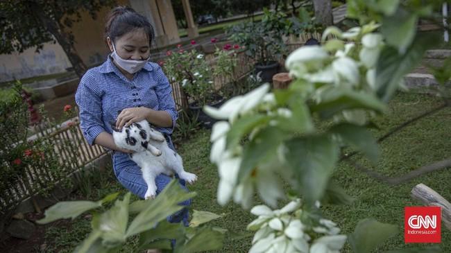 Di Taman Kelinci Bambu Apus turis bisa bermain dan mengedukasi diri bersama kawanan kelinci yang menggemaskan.