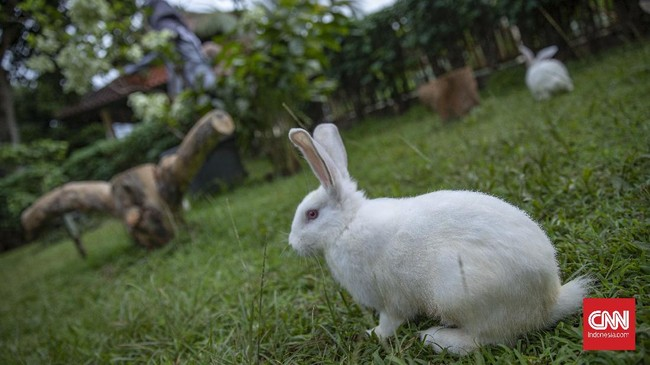 FOTO: Masuk ke Dunia Kelinci di Jakarta