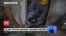 VIDEO: Ular Piton 3,5 Meter Masuk Kamar Mandi