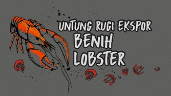 INFOGRAFIS: Untung dan Rugi Ekspor Benih Lobster