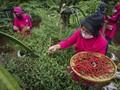 FOTO: Menikmati Hasil Panen Serentak Urban Farming di Jakarta