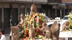 VIDEO: Uniknya Festival Makanan Untuk Monyet di Thailand
