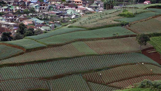 Cianjur adalah daerah yang bisa ditempuh 2 jam perjalanan dari Jakarta. Berikut 10 tempat wisata di Cianjur yang murah meriah.