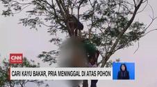 VIDEO: Cari Kayu Bakar, Pria Meninggal di Atas Pohon