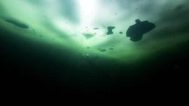 Peneliti Temukan Spesies Baru Mirip Balon 4 Km di Dalam Laut