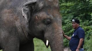 Kaavan, Gajah Paling Kesepian di Dunia Kini Punya Teman Hidup