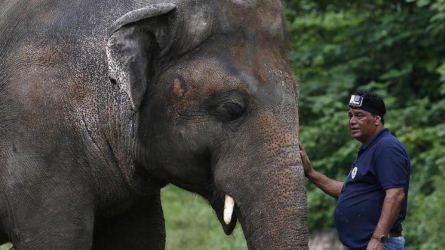 Kaavan, gajah yang dijuluki paling kesepian di dunia kini sudah memiliki teman di Kamboja usai terkurung bertahun-tahun di Pakistan.