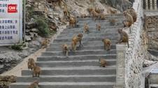 VIDEO: Monyet Angkat Perekonomian Warga di China
